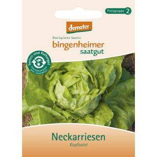 Kopfsalat, grün