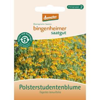 Tagetes (Polsterstudentenblume)